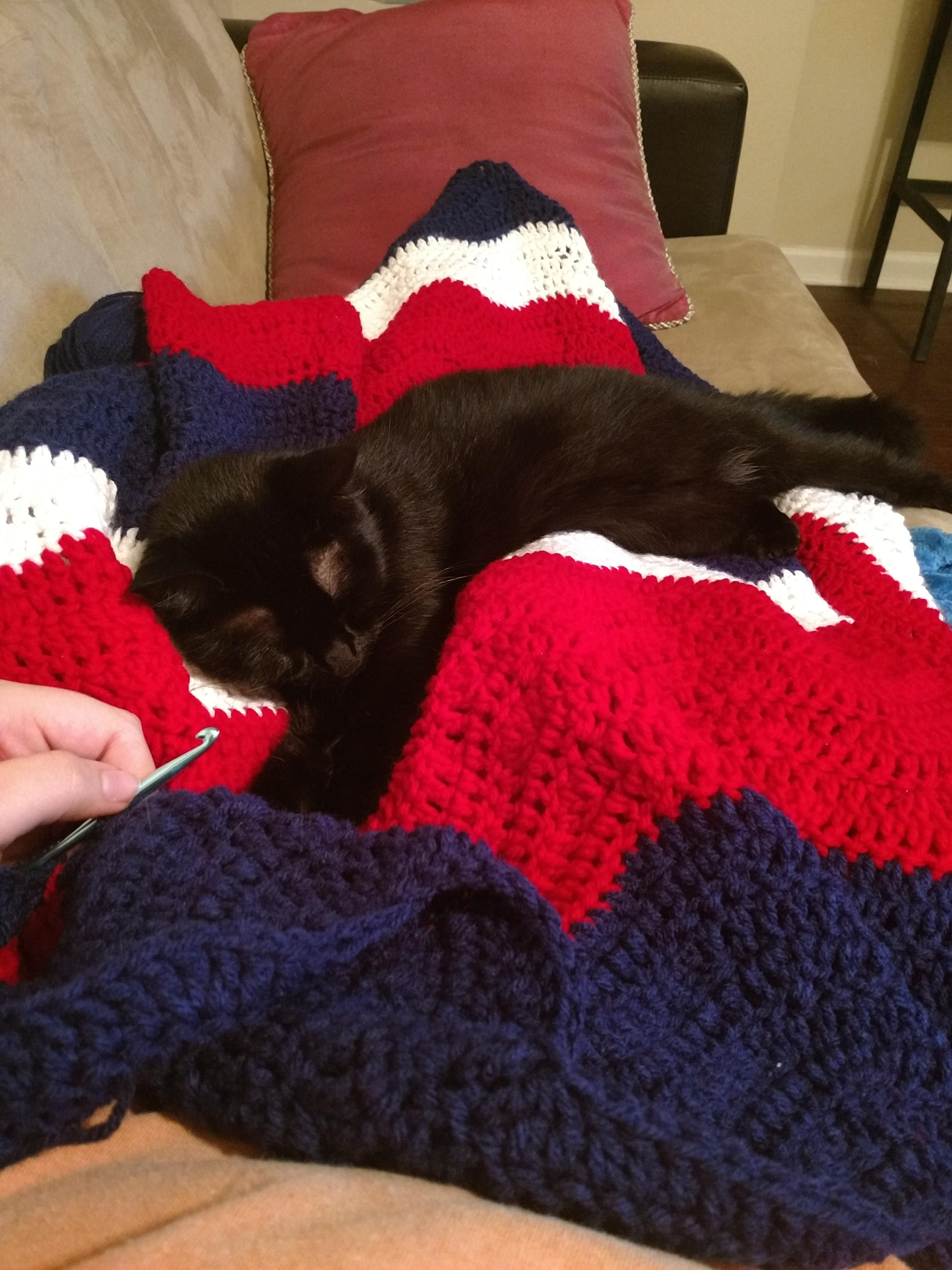 Sleepy Kitty Says Its Time To Stop Crocheting Https Ift Tt 2jynwol Cute Puppies Cats Animals Sleepy Cat Cat Day Black Cat