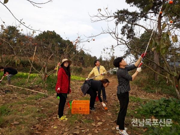 영암군청 산하 직원 한마음 한뜻 대봉감 수확 일손돕기 나서 수확