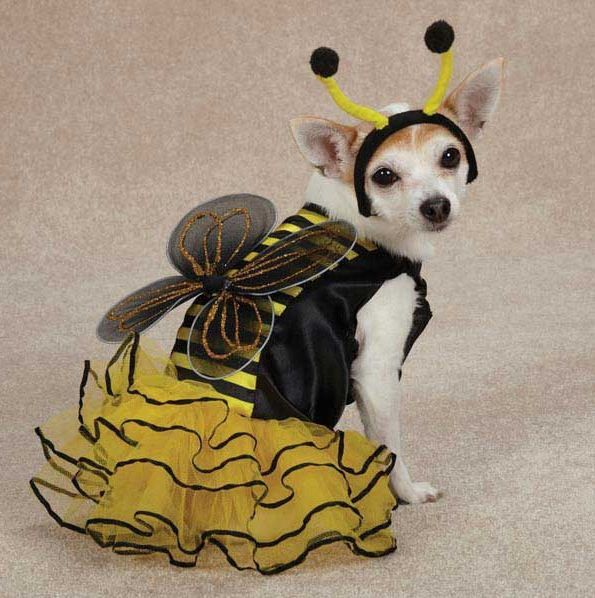Casual Canine Bee Mine Dog Halloween Costume Xs Xl Pet Bumble Bee