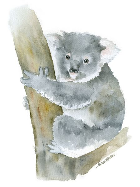 Koala Watercolor Painting Art Print Dessin Koala Croquis