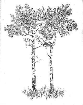 Quaking Aspens Etching From Sally Yost We Could Contact Her For