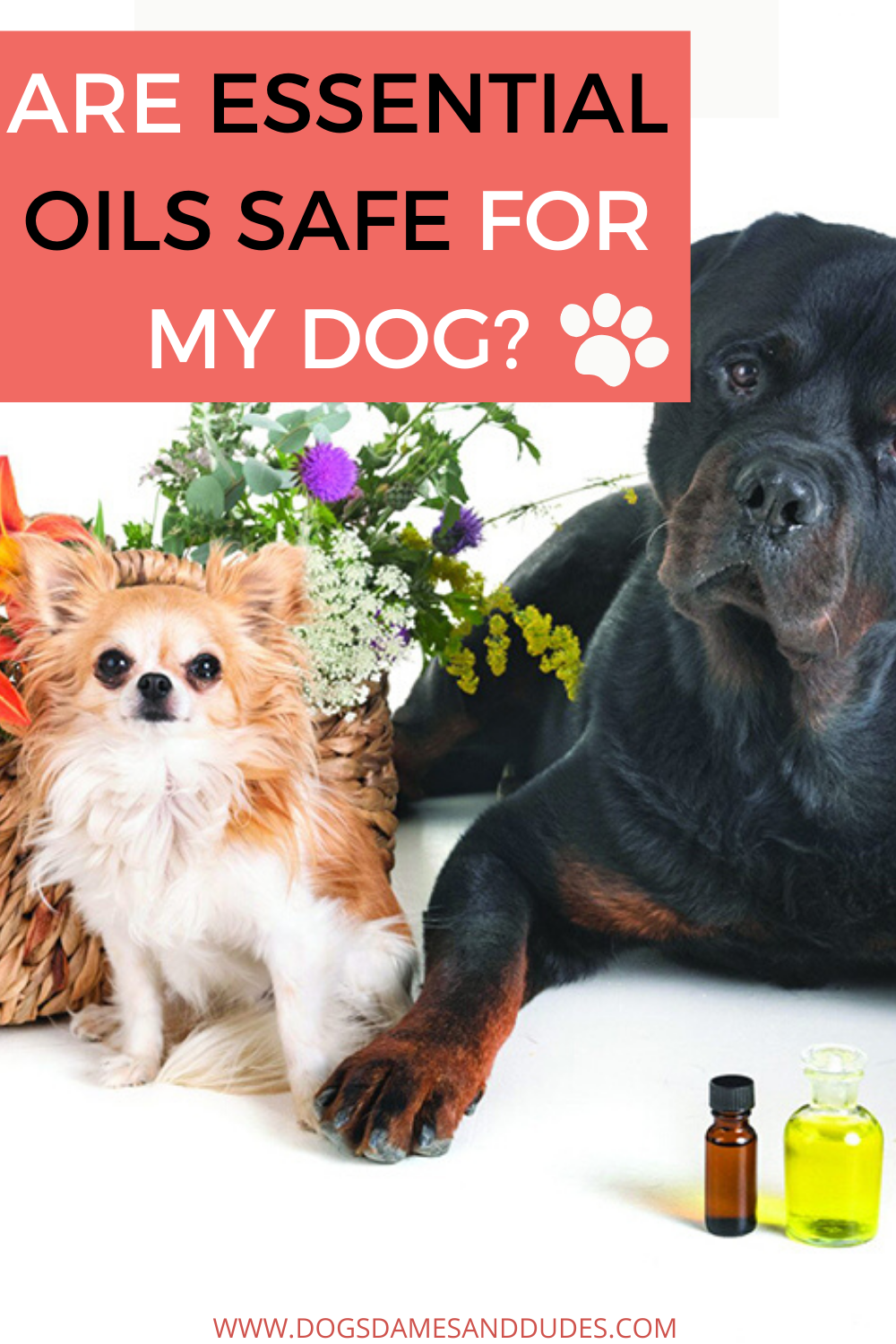Are Essential Oils Safe For My Dog Our Tips With Top 4 Essential Oils For Your Dog In 2020 Essential Oils Dogs Are Essential Oils Safe Oils For Dogs