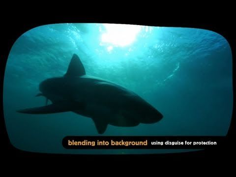 Wildlife in disguise: Amazing animal camouflage - YouTube A