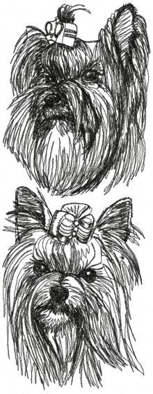 yorkie coloring pages akc - photo#47