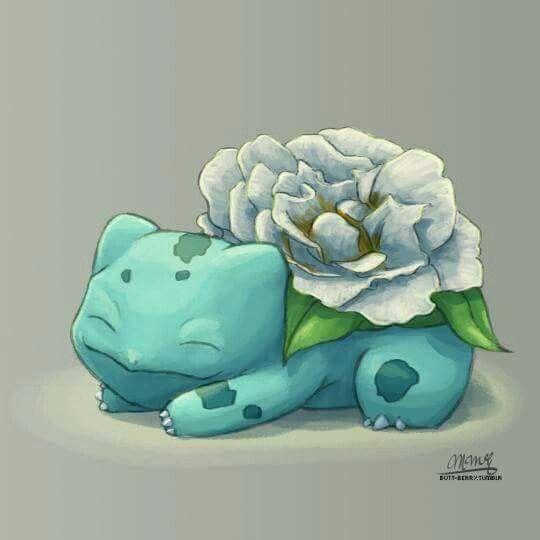 White rose   White rose