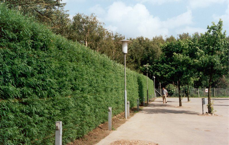 Noise barrier fully covered with ivy #TheGreenBarrier #noisebarrier