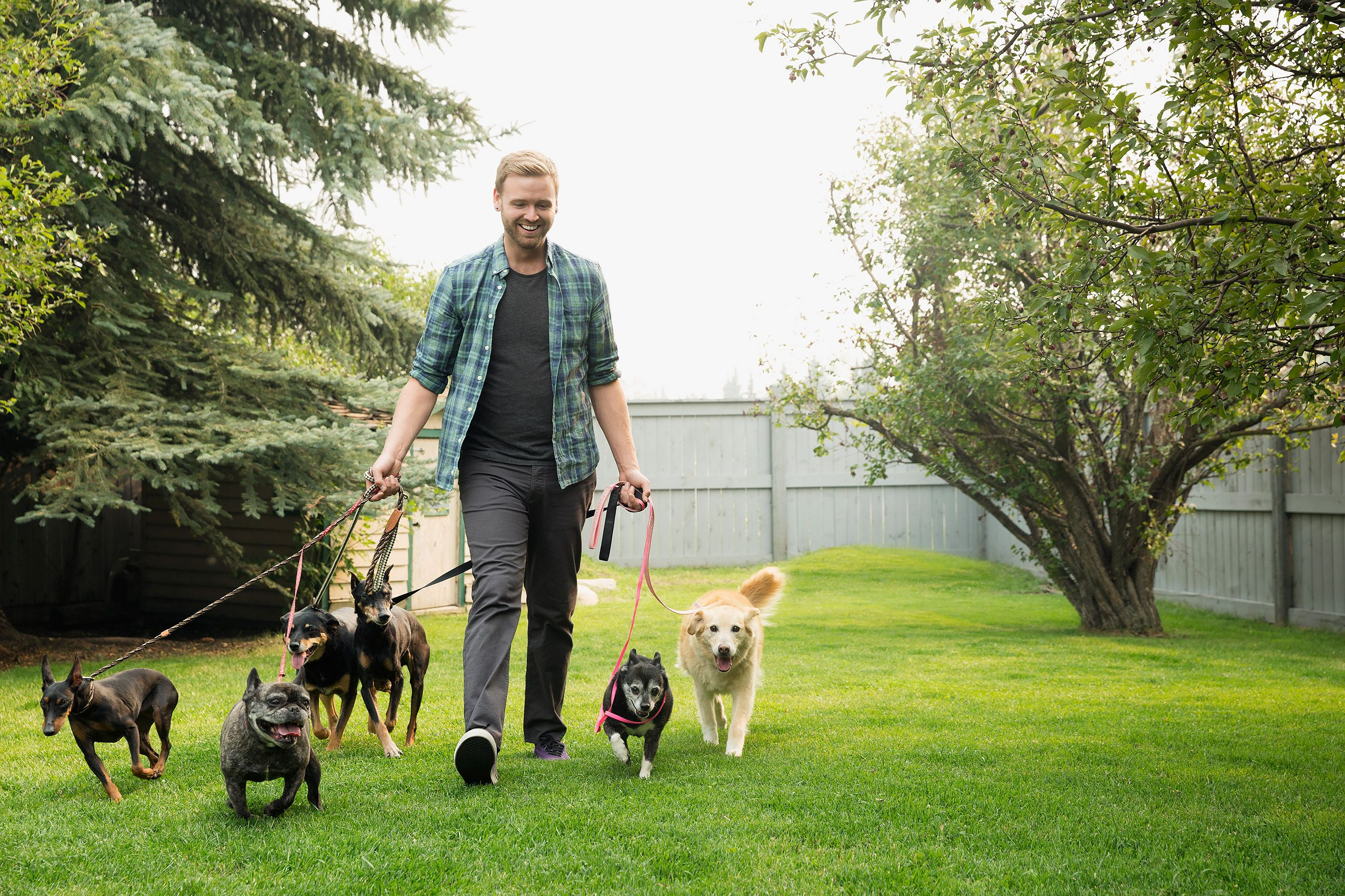 Everything You Need to Know to Find the Perfect Dog Walker