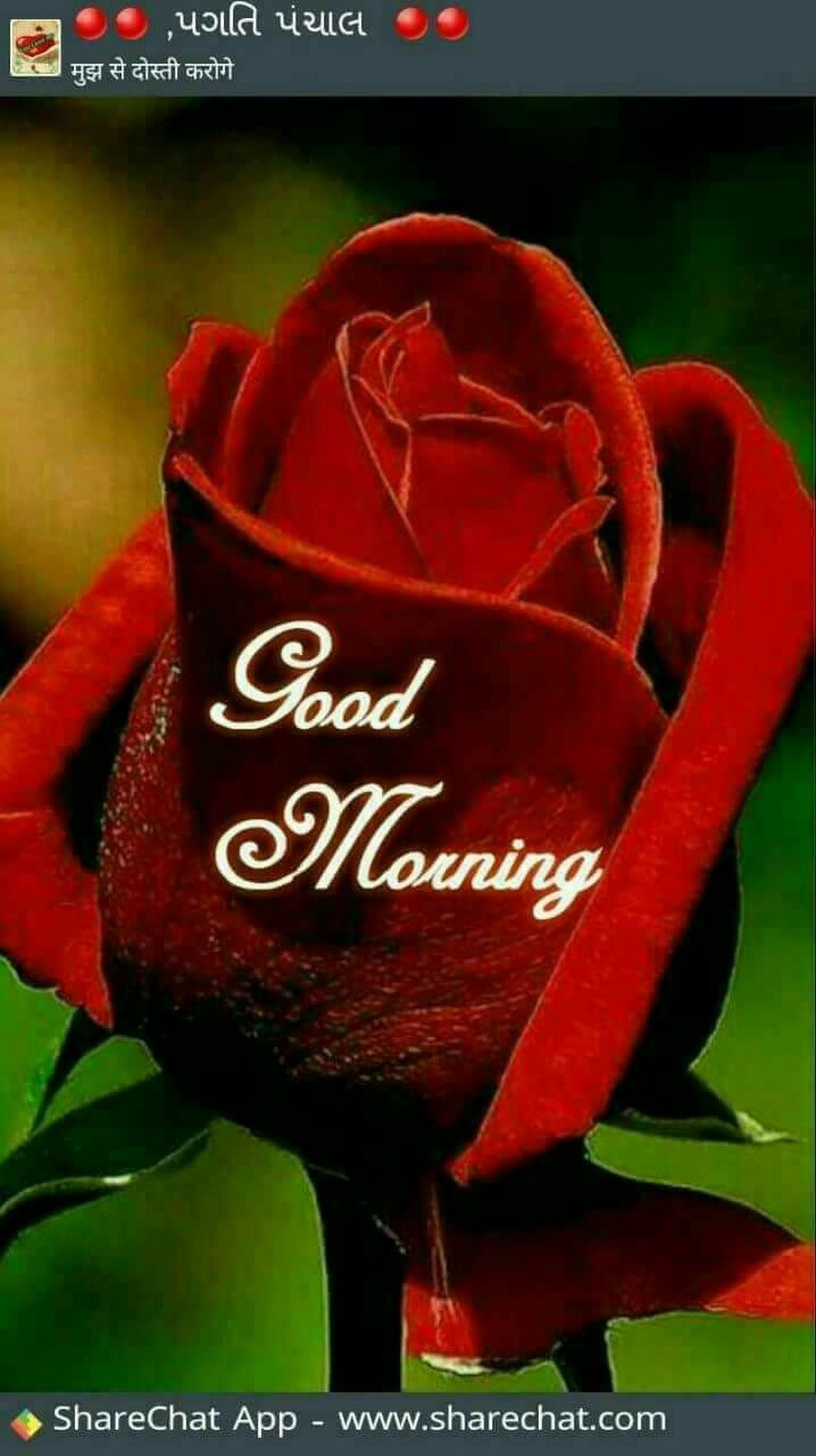 Raju Poojary Good Morning Roses Morning Pictures Good Morning