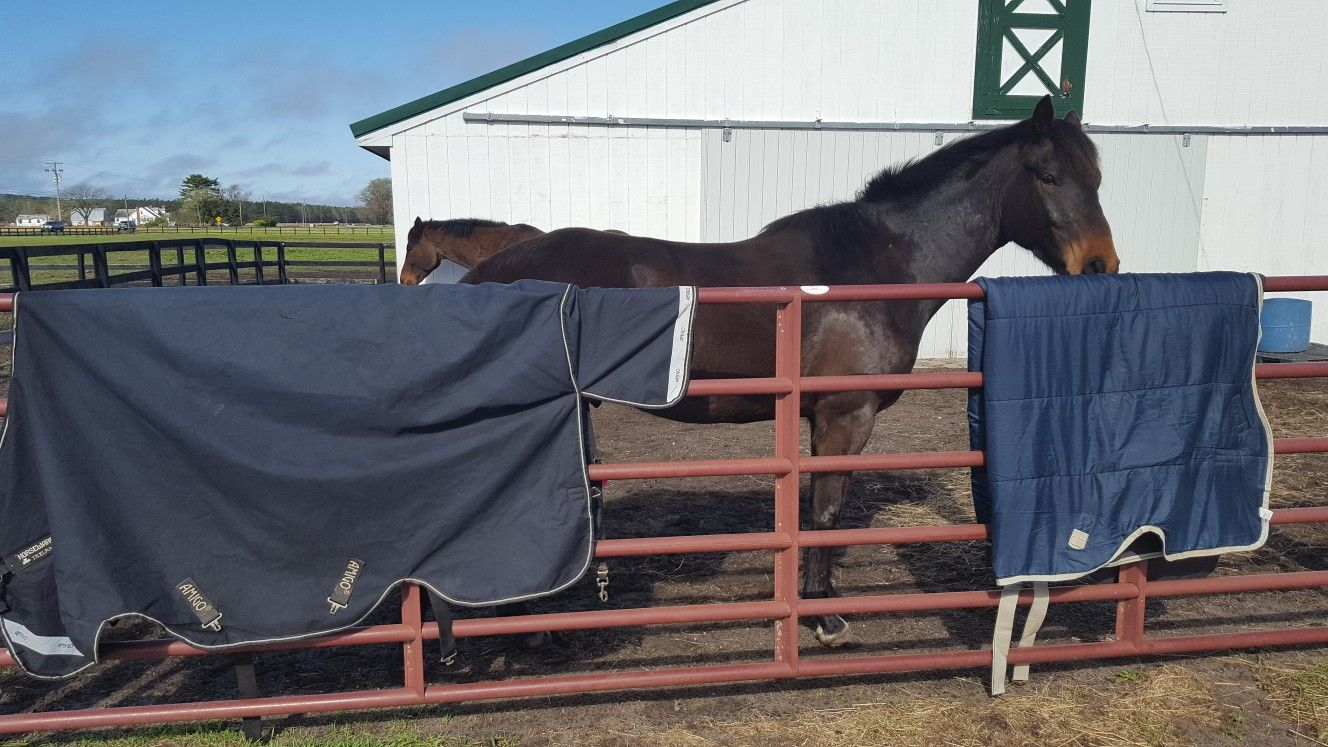 Because Even Horses Love An Absolutely Clean Blanket Use What Is Best Make Your Blankets Last And Keep Your Horses Happy Horse Love Horses Horse Lover
