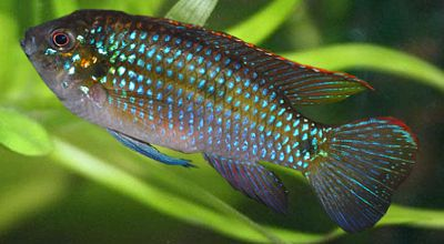 African Butterfly Fish These Are So Beautiful Beautiful Tropical Fish Butterfly Fish Fish