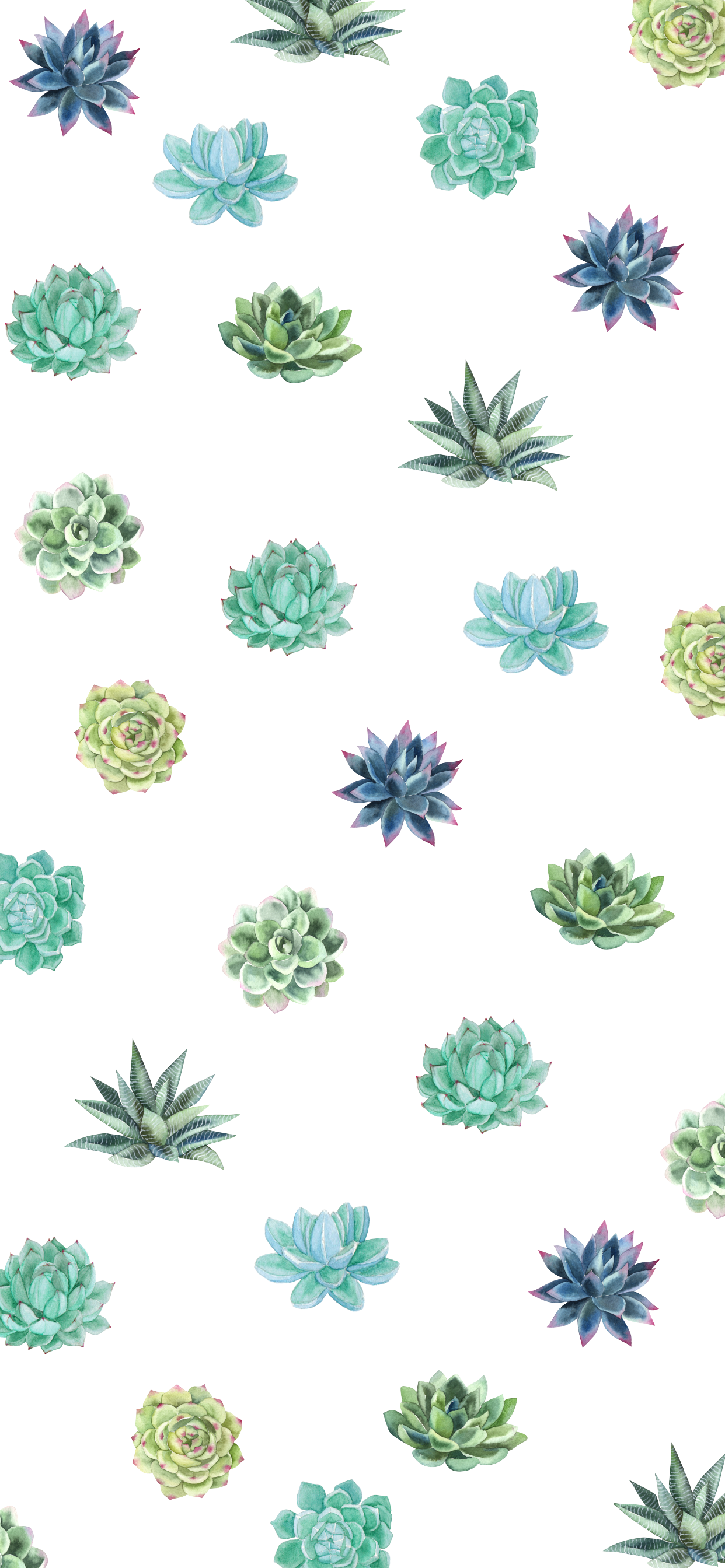 Summer Succulent Iphone Wallpaper Phone Wallpaper Iphone Summer Succulents Wallpaper Iphone Wallpaper Pineapple