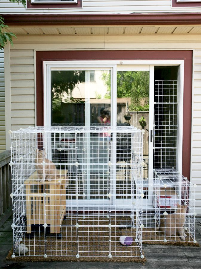 Diy Cat Enclosure Under 100 Diy Cat Enclosure Cat Enclosure Outdoor Cat Enclosure