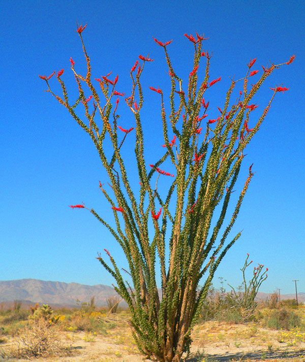ocotillo express wind energy project