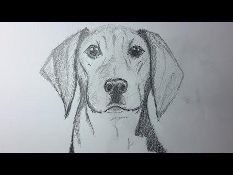 Cómo Dibujar Un Caballo Como Hacer Un Dibujo Para Principiantes Como Desenhar Um Cava Dibujos De Animales Reales Como Dibujar Un Perro Perros Dibujos A Lapiz