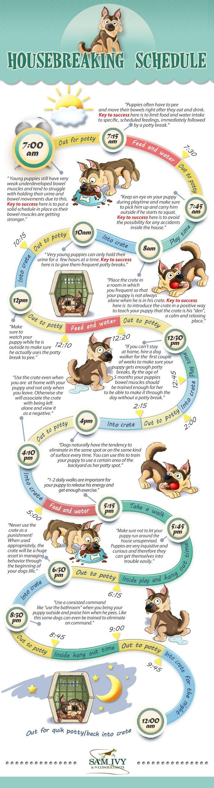 Sam Ivy K9 S Housebreaking Schedule Training Your Puppy Puppies Puppy Training Tips