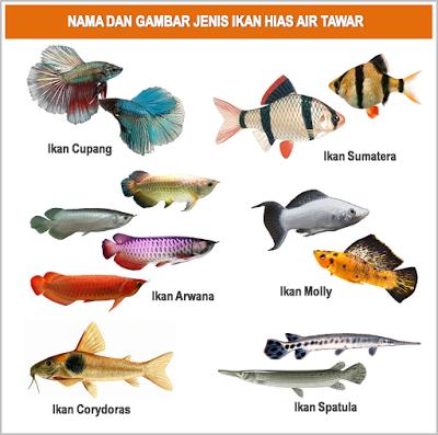 GAMBAR│FOTO│JENISMACAMNAMA IKAN HIAS AIR TAWAR Ikan