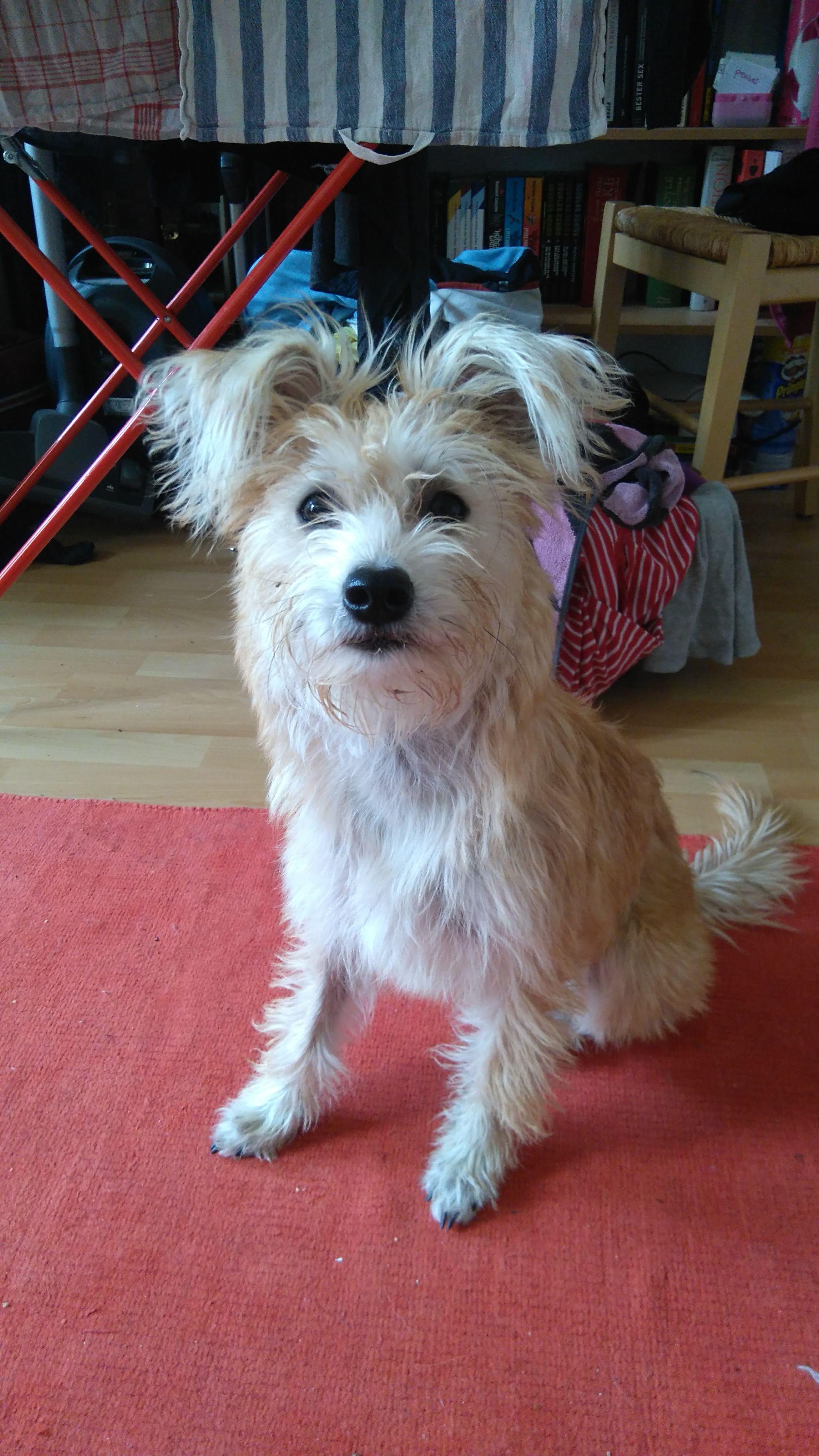 Pin Von Pawshake Deutschland Auf Pawshake Deutschland Hunde Terrier Mischling Jack Russell Terrier Susse Hunde