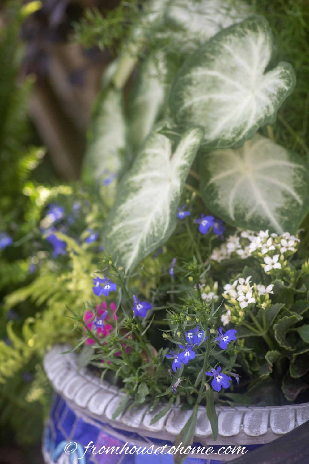 Shade Container Plants: 10 of the Best Blue Annuals For ...
