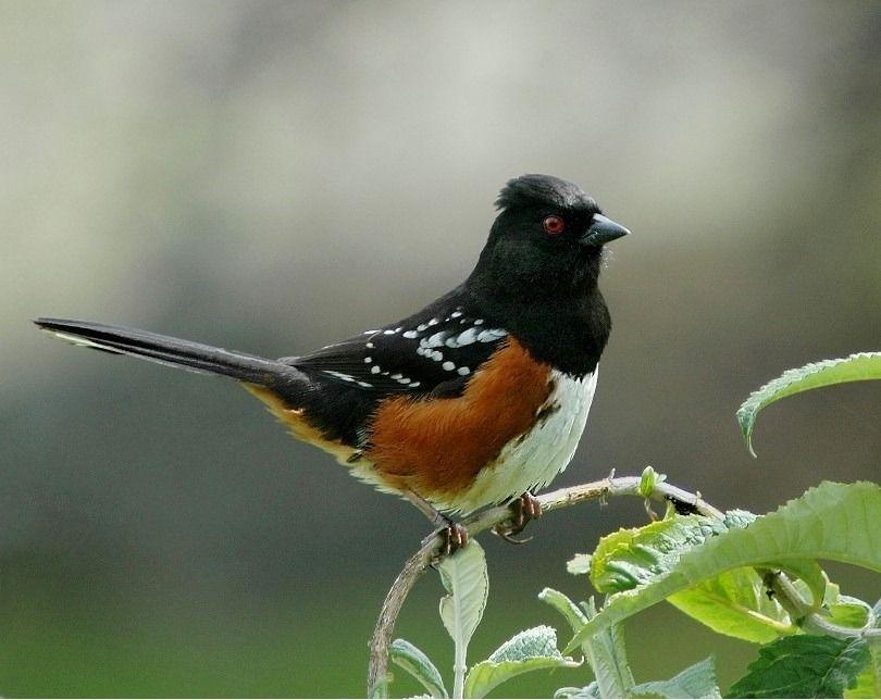 Just Birdsclick Images For Descriptions