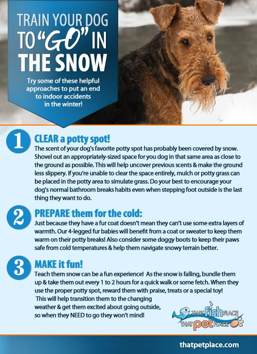 Trouble Getting Your Dogs To Go In The Snow Try Some Of These
