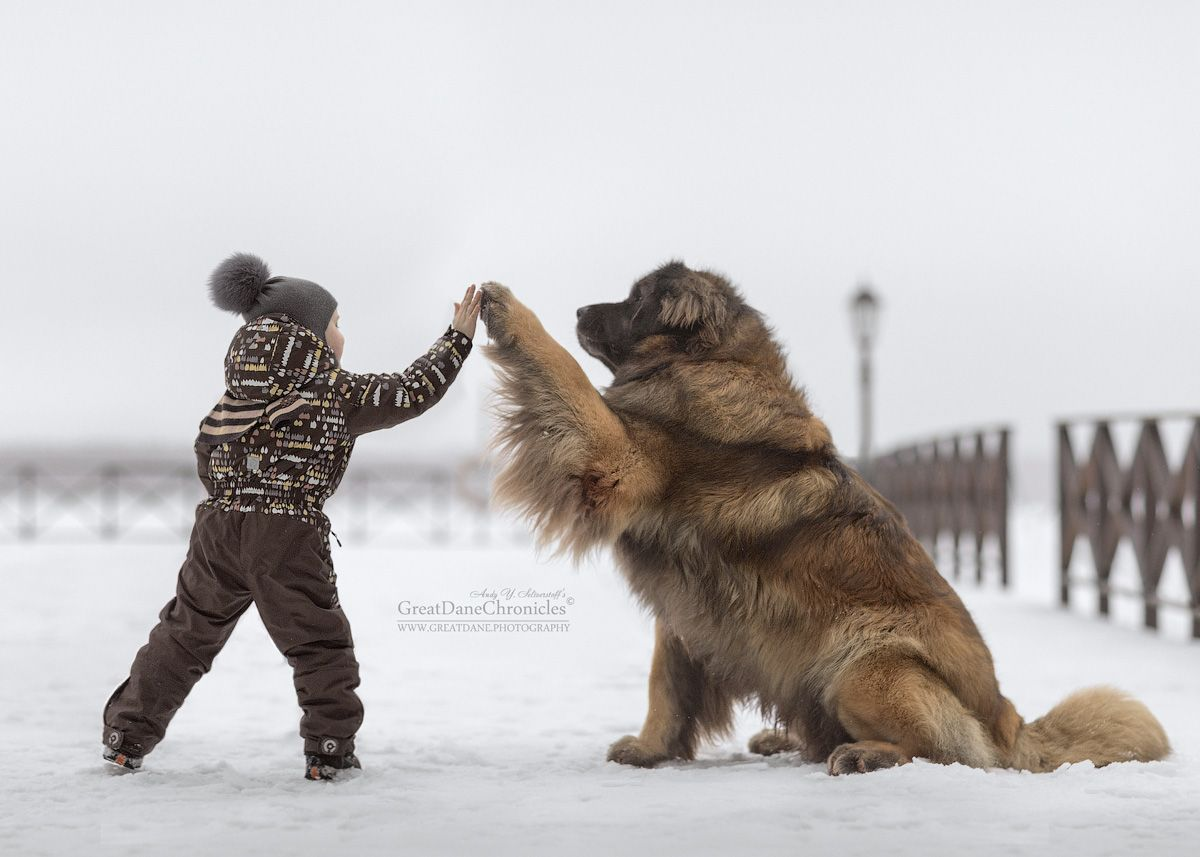 Photographer Андрей Селиверстов Andy Seliverstoff Проша Дай - Tiny children and their huge dogs photographed in adorable portraits by andy seliverstoff