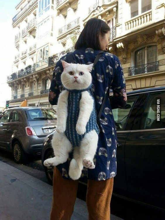 Me taking my cat with me everywhere