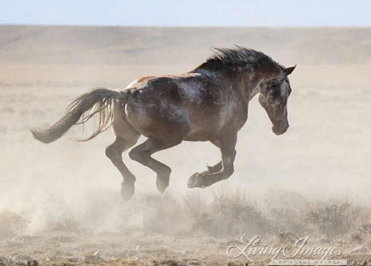 Pin By Marilee On Horses In Motion Horses Wild Horses Wild