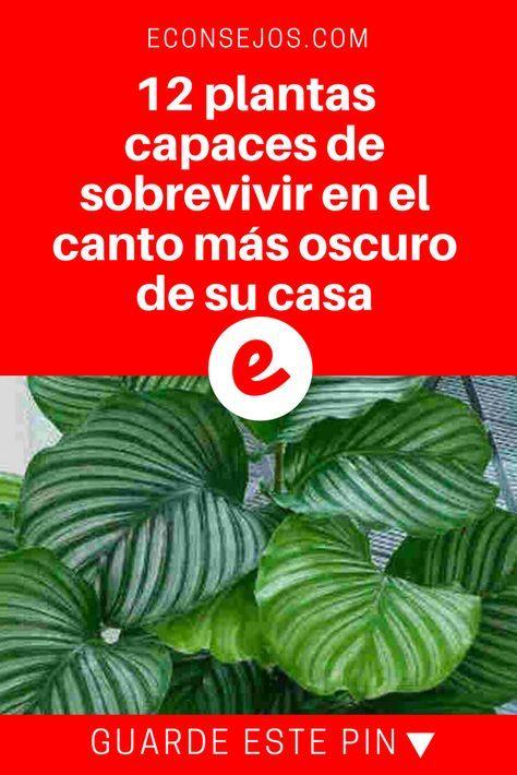 Stas son las mejores plantas de interior que necesitan - Plantas de interior que necesitan poca luz ...
