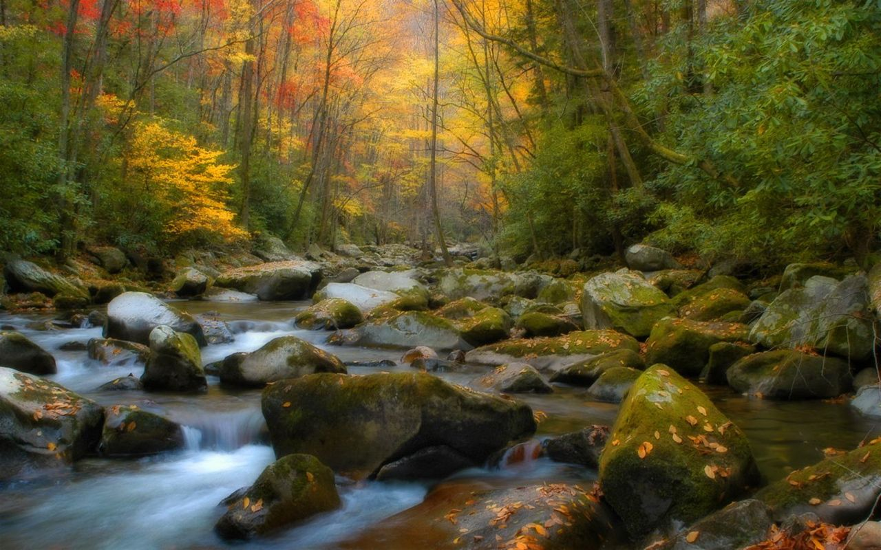 Fall In Tennessee Desktop Wallpaper 1280x800 Nature Wallpaper Natural Scenery Nature Scenes