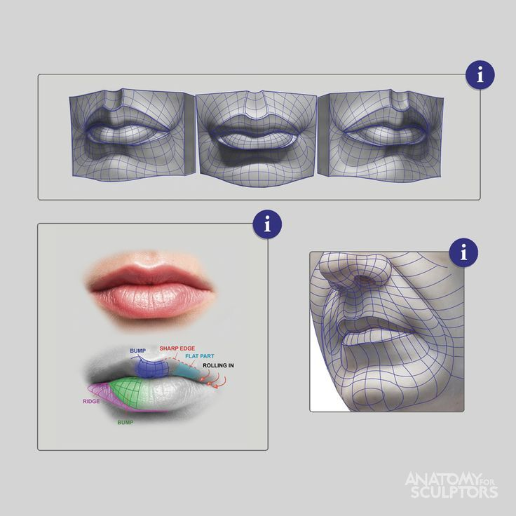 mouth — Anatomy references for artists | Папье | Pinterest | Anatomy ...