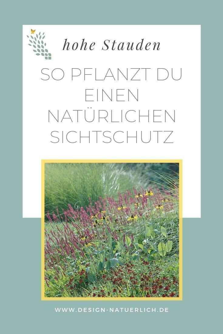 Sichtschutz pflanzen mit Stauden und Gräsern #sichtschutzpflanzen Statt Zaun un #sichtschutzpflanzen