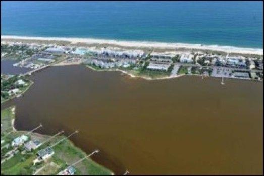 Like weeds of the sea, 'brown tide' algae exploit nutrient-rich coastlines