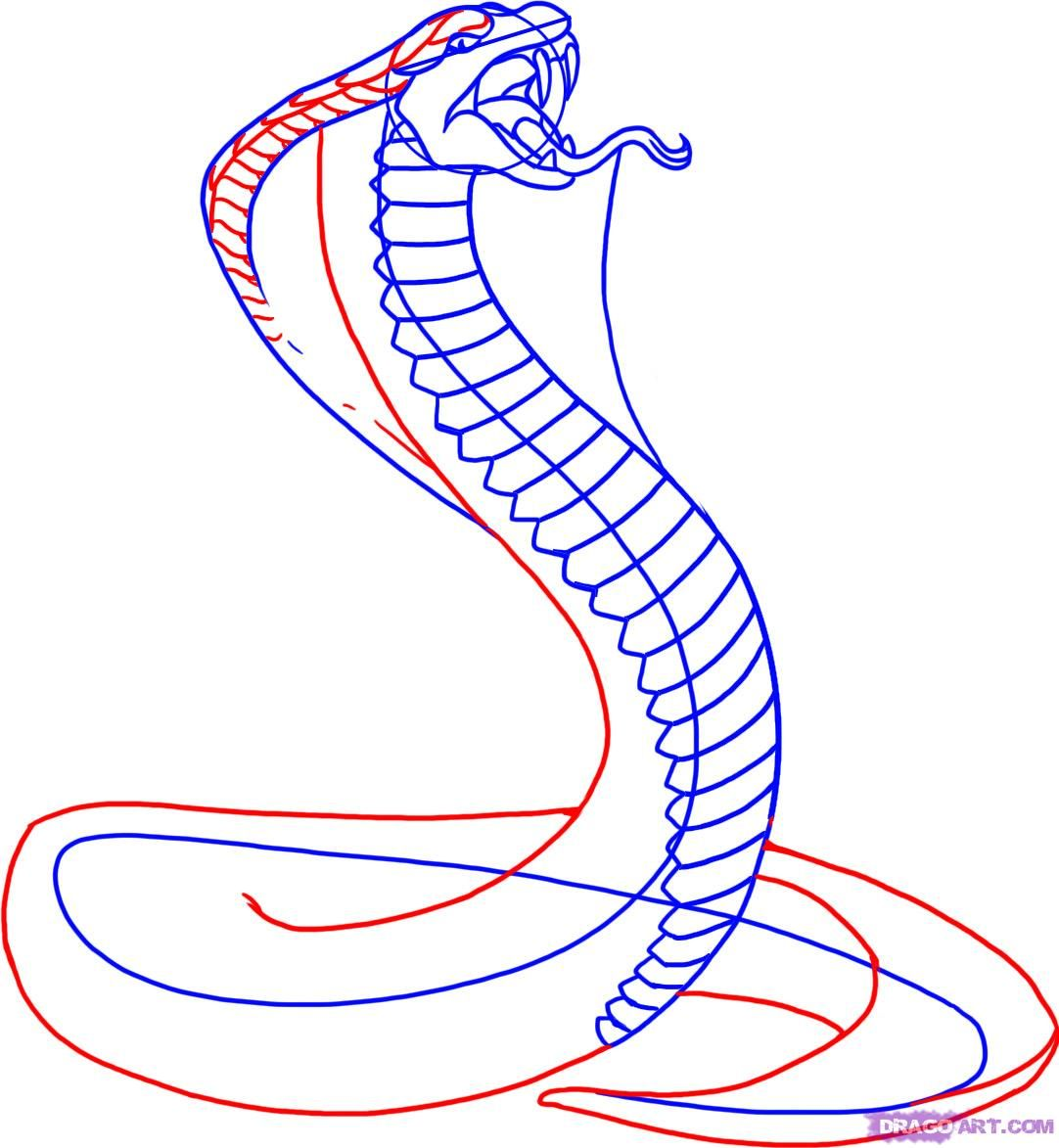 How to draw a snake | snake | Pinterest | King cobra ...