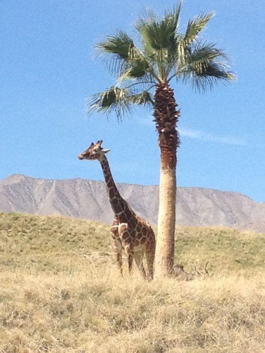 80c399ac547d9ccafd33665463667656 - The Living Desert Zoo & Botanical Gardens