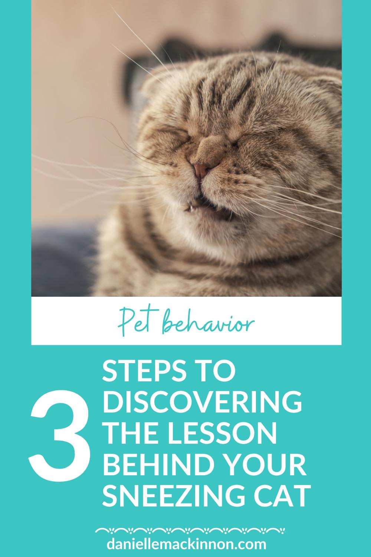 Does Your Cat Sneeze In 2020 Cat Sneezing Cat Sneezing Remedies Cat Health