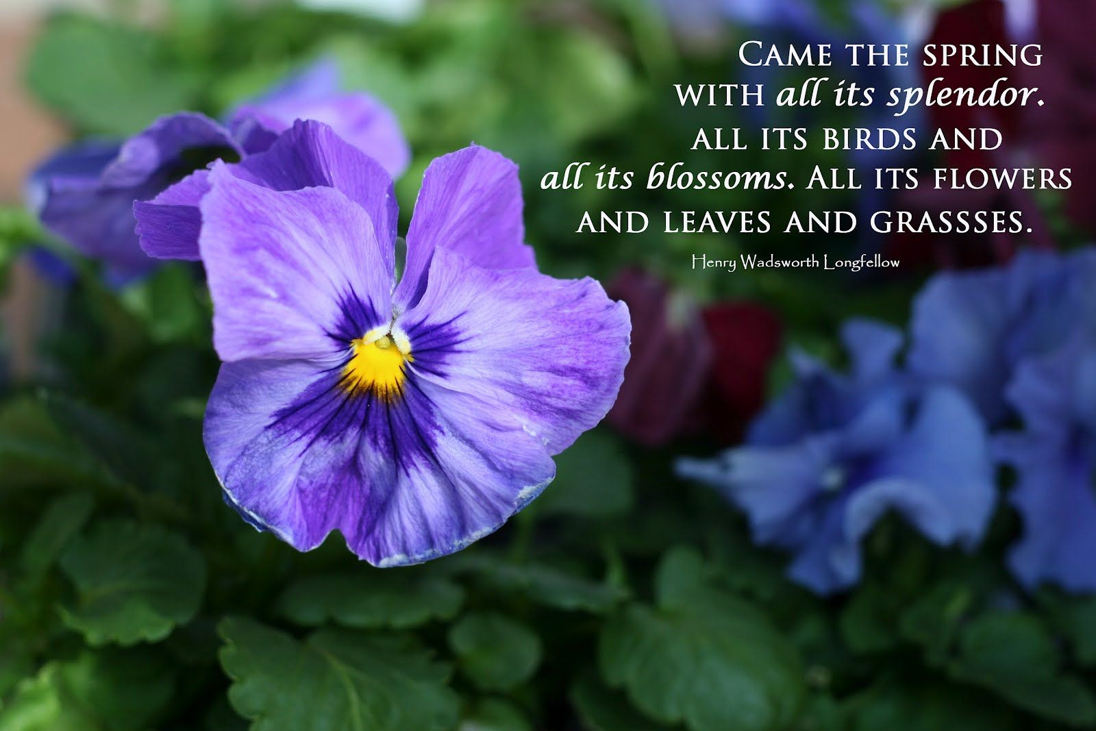 Spring Quotes Brilliant Spring Quotes  You Have Read This Article Quotes About Spring .