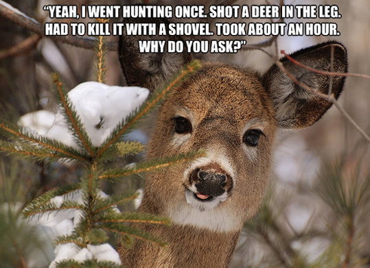 Deer Jokes Quotes Funny Quotes About Deer 4 With Images
