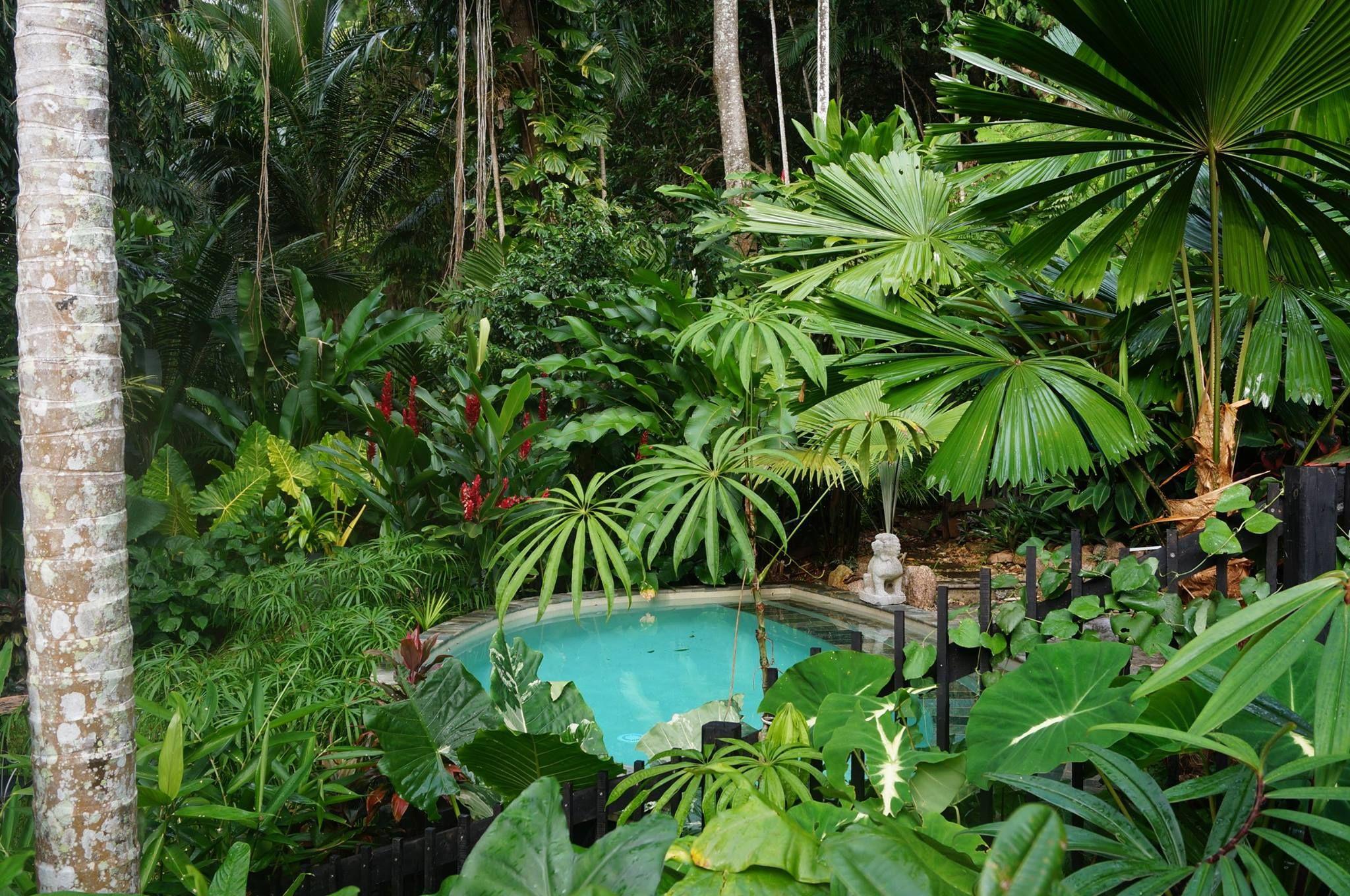 The North Queensland garden of Mark Vowles | paysagisme ...