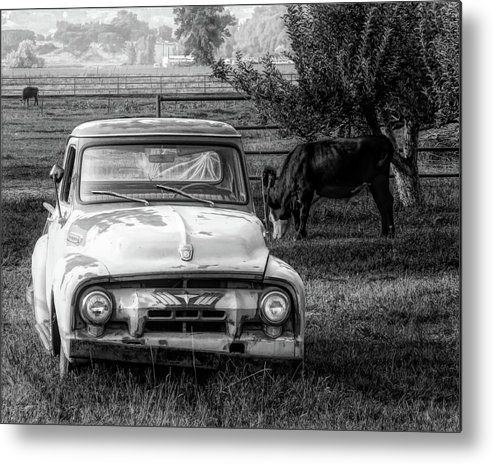 Truck and Cows Living Together BW Metal Print by DK Digital.  All metal prints are professionally printed, packaged, and shipped within 3 - 4 business days and delivered ready-to-hang on your wall. Choose from multiple sizes and mounting options. #art #artprints #wallart #metalprint #homedecor #rural #rurallife #farmlife #countrylife #countryside #abandoned #abandonedtruck #oldtruck #grazingcows #blackandwhite