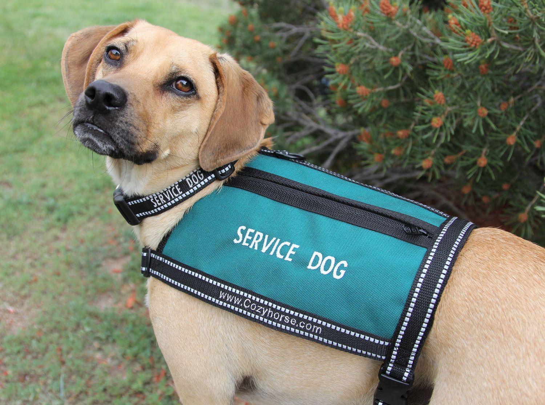 SERVICE DOG Vest size MEDIUM. 56.00, via Etsy. (With