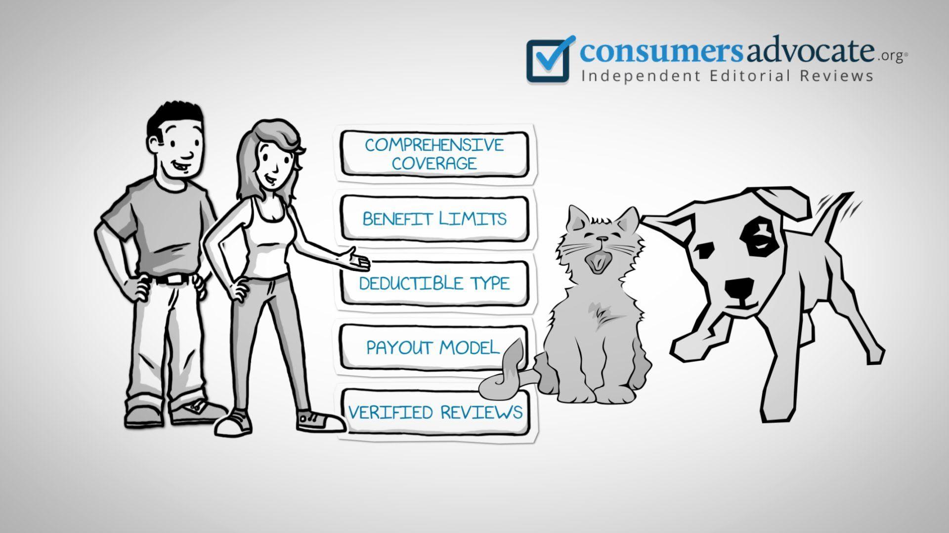 Pet Insurance 10 Best Pet Insurance Explained Best pet