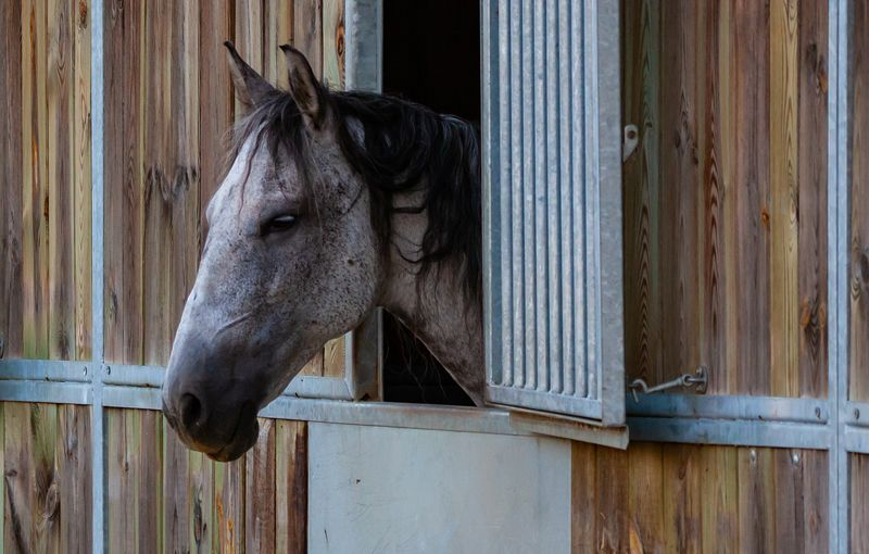 The Role of Tradition vs Science in Handling Horses