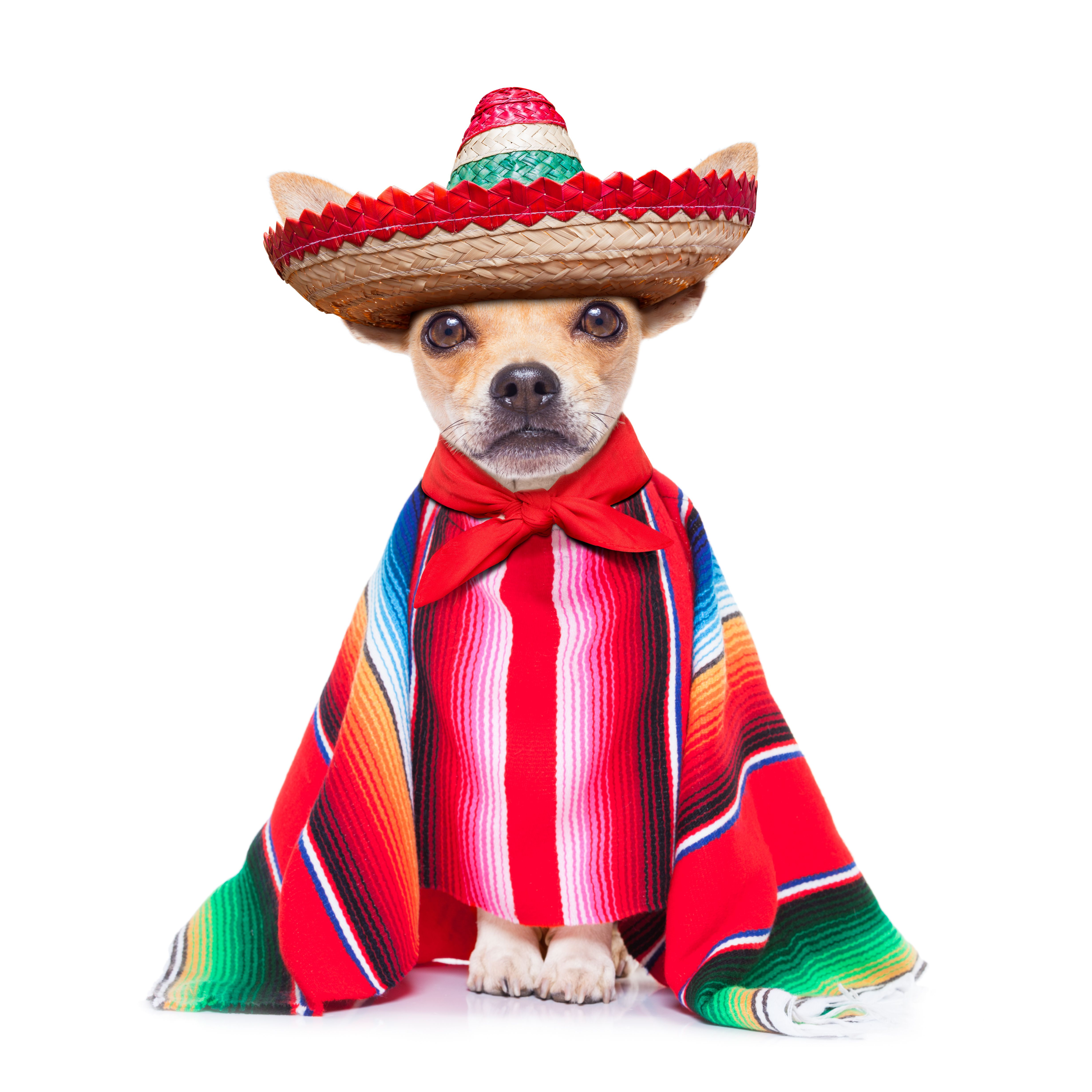 Did You Know The Chihuahua Was Named After The State In Mexico