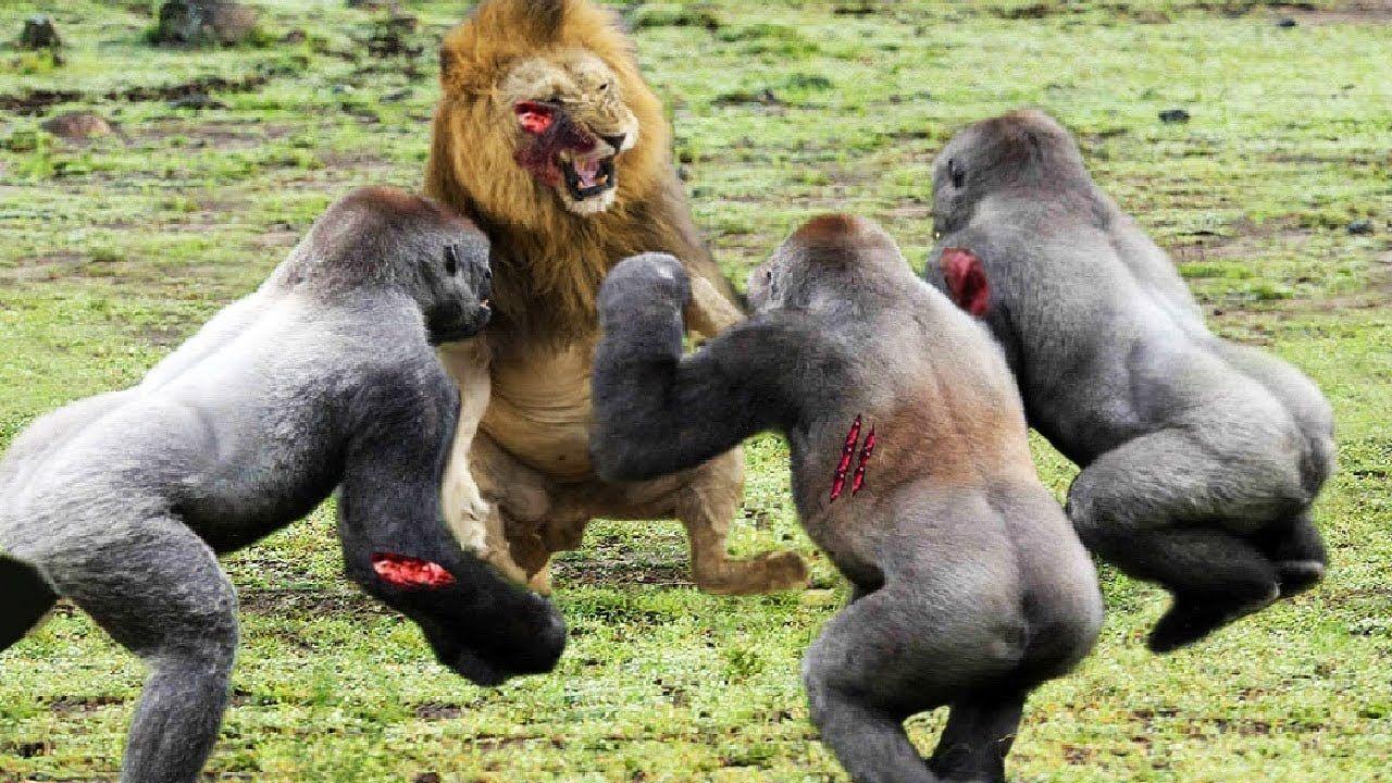 109 Best Animals Images On Pinterest: Best Moments Wild Animal Attacks