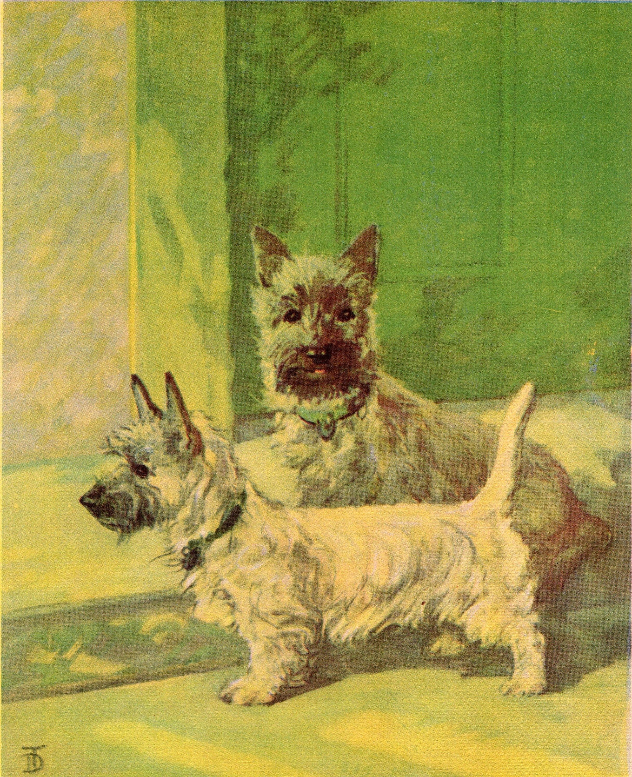 1932 Antique Cairn Terrier Dog Print Twin Cairn Terrier Puppy Art