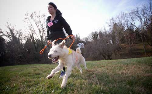 Find Your New Running Partner At A Dog Shelter Shelter Dogs