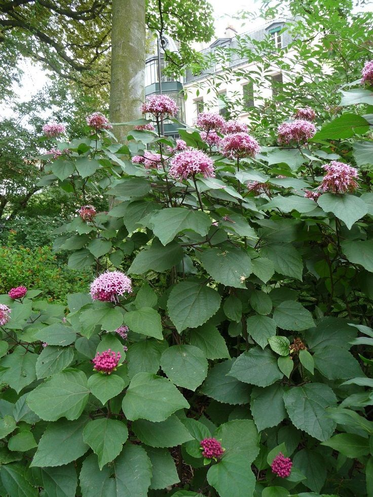Top 10 Unusual Fragrant Plants And Herbs To Grow In Your 400 x 300