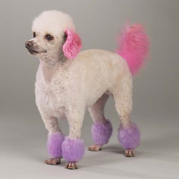 Top Performance Dog Hair Dye Gels | frida | Pinterest | Dog hair ...