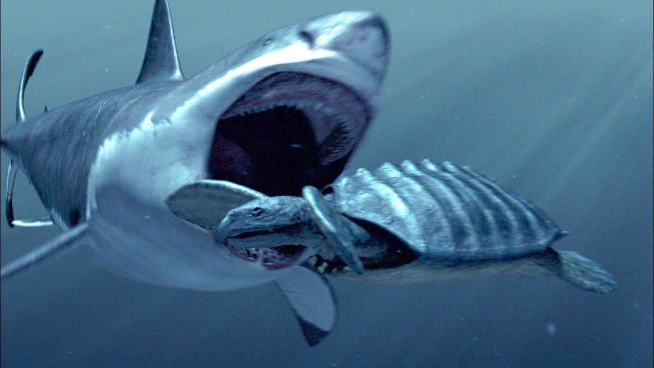 How The Megalodon Hunted! :) | Shark-o-mania! | Pinterest ...