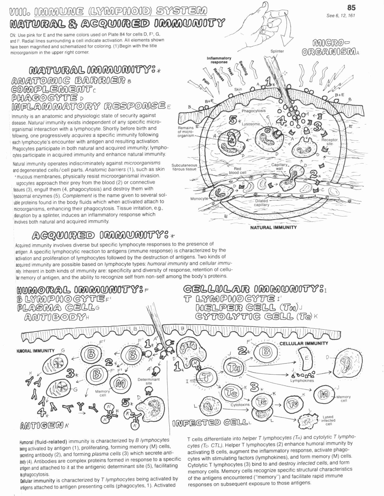 Science Tools Coloring Page Awesome Coloring Page 2 Immune